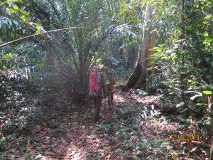 dja forest reserve
