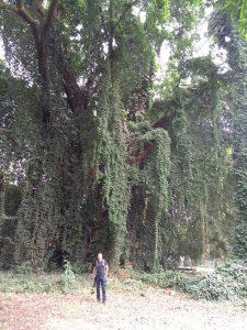 limbe botanical garden