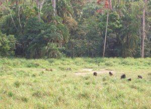 lobeke petti savanna
