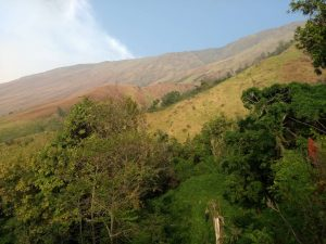 mount cameroon - view of refuge